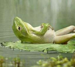 Zen on the water